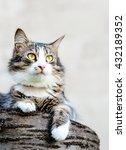 Gray Cat On A Light Background