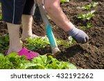 woman is working in the garden... | Shutterstock . vector #432192262