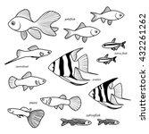 aquarium fish collection....   Shutterstock .eps vector #432261262