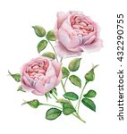 Stock photo english roses watercolor 432290755