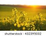 rapeseed field in sunset | Shutterstock . vector #432395032