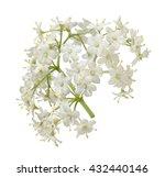 elder blossoms | Shutterstock . vector #432440146