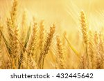 ears of wheat | Shutterstock . vector #432445642