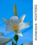 flower on white  | Shutterstock . vector #432470302