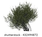 3d thick bush isolated | Shutterstock . vector #432494872