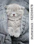 Stock photo cute gray funny kitten sleep in gray cloth 432534478