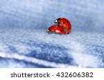Love The World Of Ladybirds
