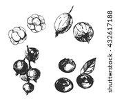 sketch berries set  blueberries ...   Shutterstock .eps vector #432617188