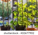 home grown organic vegetable ... | Shutterstock . vector #432677902