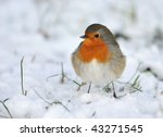 Cute Robin On Snow In Winter ...