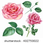 Set Of Floral Elements. Rose...
