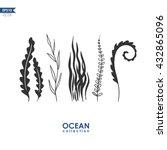 Sea Plants And Seaweed Isolate...