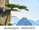 Huangshan Pine Trees. Located...