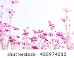 pink cosmos flowers with sky  | Shutterstock . vector #432974212