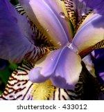 Iris Blossom 3. The Blossom Of...