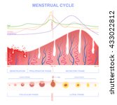 scheme of the menstrual cycle ... | Shutterstock .eps vector #433022812