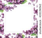 violet lilac on white flower... | Shutterstock . vector #433158562