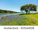 Beautiful Bluebonnets Along A...