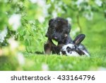 Funny German Shepherd Puppy...