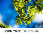 Green Leaves On A Background O...