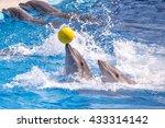 a cute dolphins during a speech ... | Shutterstock . vector #433314142