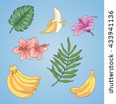 vector banana illustration | Shutterstock .eps vector #433941136