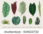 set leaf. exotics. vintage... | Shutterstock .eps vector #434023732