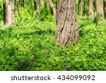 Forest With Green Lawn And Tal...