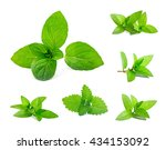 fresh mint and melissa leaves... | Shutterstock . vector #434153092