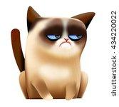 Cute Sad Grumpy Siamese Cat