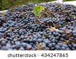 Harvested Red Grapes On Truck