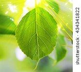 juicy green leaf in the sunlight | Shutterstock . vector #434341822