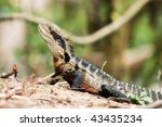 eastern water dragon in the... | Shutterstock . vector #43435234