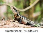 eastern water dragon in the...   Shutterstock . vector #43435234