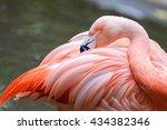 Close Up Of A Flamingo Bird...