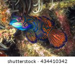small tropical fish... | Shutterstock . vector #434410342