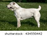 central asian shepherd dog... | Shutterstock . vector #434550442