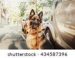 German Shepherd Dog With Leash...