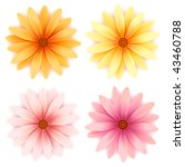 vector  daisy flowers set ... | Shutterstock .eps vector #43460788