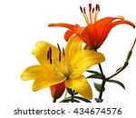 Summer Flower Series  Macro Of...