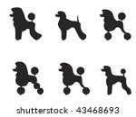 black poodle clipped in various ... | Shutterstock .eps vector #43468693