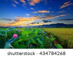 lotus mountain sky sunrise... | Shutterstock . vector #434784268