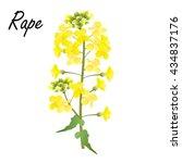 Rape  Brassica Napus  Rapeseed...