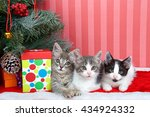 three tabby kittens next to... | Shutterstock . vector #434924332