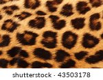 Real Leopard Skin Spots  Makes...