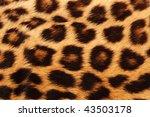 Real Leopard Skin Spots  Makes...