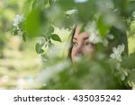 girl in apple tree | Shutterstock . vector #435035242