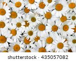 chamomile flowers background  | Shutterstock . vector #435057082