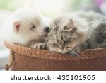 Stock photo cute siberian husky and persian cat lying in basket bed 435101905