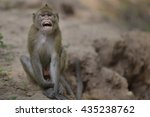 monkey | Shutterstock . vector #435238762